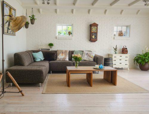 Plantas para Limpiar y Equilibrar tu Casa